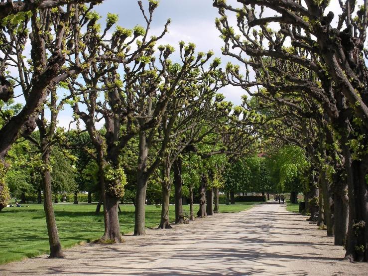 Kongens_Have_-_tree-lined_avenue