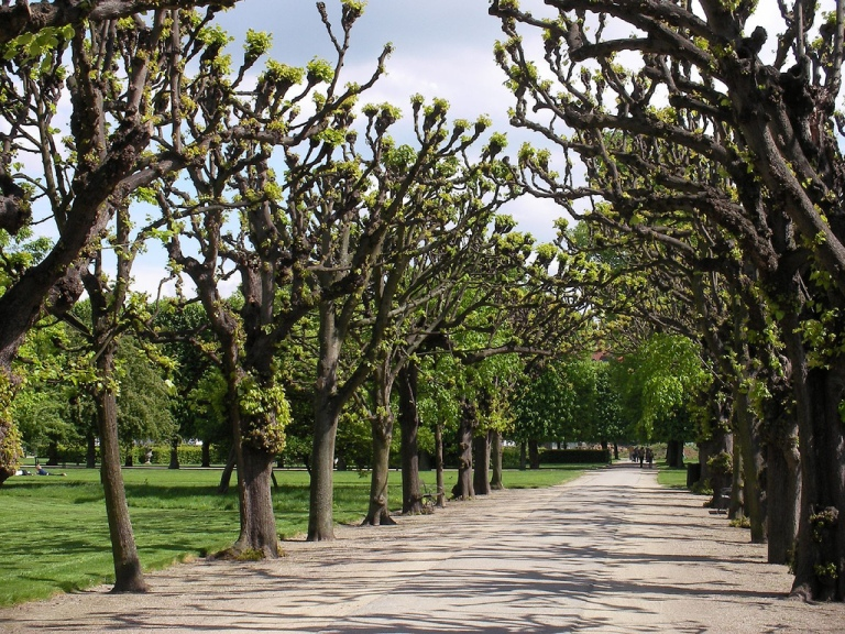 Kongens_Have_-_tree-lined_avenue